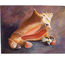 Sanibel Shells Photographic Print