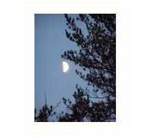 Moonlit Tree Art Print