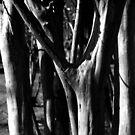 Tree by Gabriel Martinez
