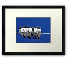Seven Swallows Sitting Framed Print