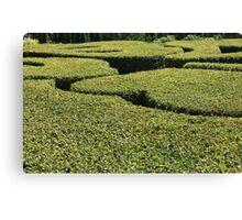 Topiary Canvas Print