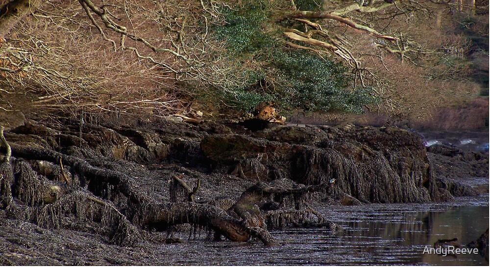 Muddy Waters/Seaweed Dip. by AndyReeve