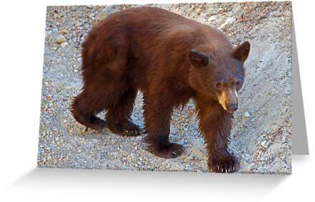 Black Bear by Eyal Nahmias