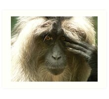 Lion-Tailed Macaque Art Print