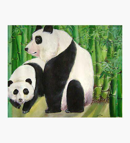 pandas 1 Photographic Print