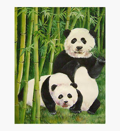 pandas 2 Photographic Print