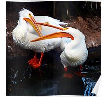 Bird Fight Poster