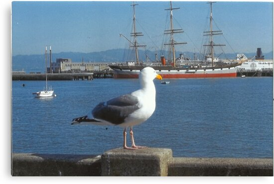 The Seagull Looks Out To The Sea by RobynLee