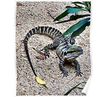 Captive Dragon Poster