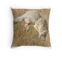 Coyote pounce 2 Throw Pillow