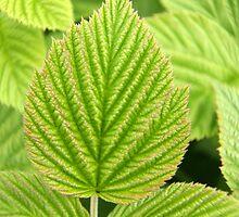 Raspberry Leaf Art by coffeebean