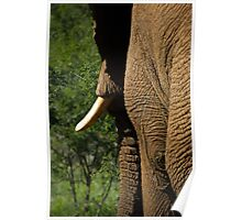 Elephant Side Profile Poster
