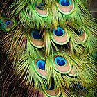 Peacock Colour by Ladyshark