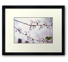 Nature Innocence Framed Print