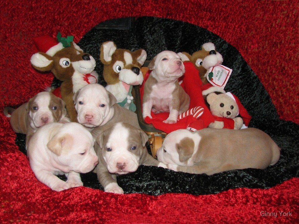 Waiting For Santa by Ginny York