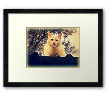 Roof Cat Framed Print
