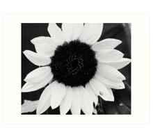 sunflower in black & white Art Print