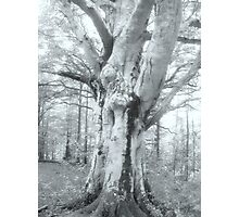 White Imposing Tree Photographic Print