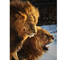 Grumpy Brothers Photographic Print