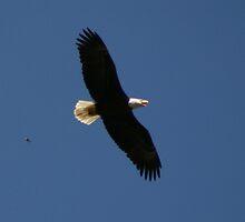 Soaring Free by Eagleye