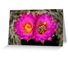 Bee on Hedgehog Cactus Blossom Greeting Card