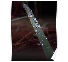 Rain drops on grass Poster