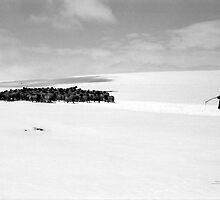 shepherd by dominiquelandau