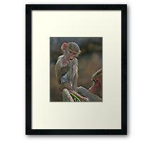 Balancing Act. Framed Print
