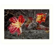winter vine Art Print