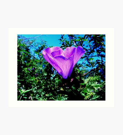 Pink Flower III Art Print