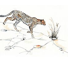 Majestic Cheetah Photographic Print