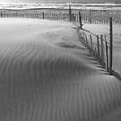 Lines in the Sand by Jeff Newell