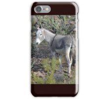 Lake Pleasant, AZ - Donkey iPhone Case/Skin