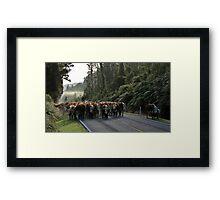paringa drive Framed Print