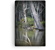 Ready to Fall, Old trees at Gunbower Canvas Print