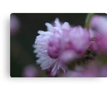 Flowering Almond ( I think). Canvas Print