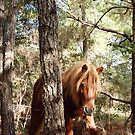 Wild Feral Horse-Prances With Grace by Sandy O'Toole
