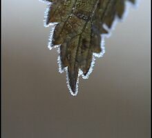 Frosty leaf by Melody Shanahan-Kluth