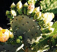 Prickly Pear Blooming by Janet Ellen Lusk