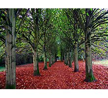 An Avenue of trees Photographic Print