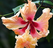 Hibiscus by ~ Fir Mamat ~