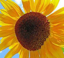 Summer's Gold by Kathleen Brant