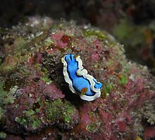 Another Flavor of Nudi.... by Michael Powell