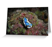 Another Flavor of Nudi.... Greeting Card