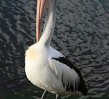 Pelican Preen II by saharabelle