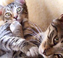 Playful kittens 02 by Matt Ferrell