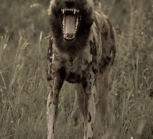 Yawn! by Gerry Van der Walt
