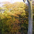 Autumn by Gartshore