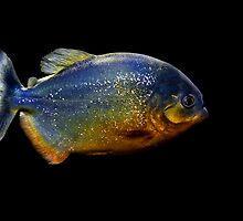 Piranha Beauty by Bobby McLeod