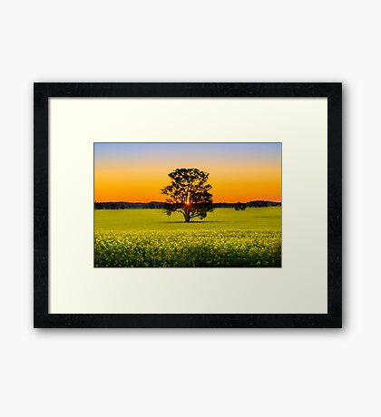 Canola Sunset Framed Print